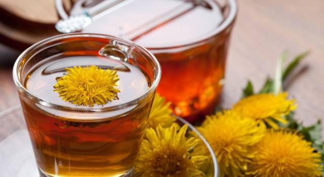 Dandelion herbal tea: discover its purifying and diuretic properties