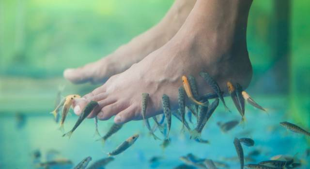 Fish pedicure, we discover risks and benefits of Garra Rufa therapy