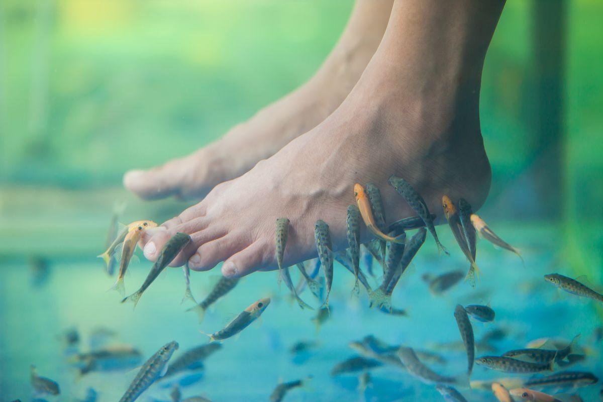 Fish pedicure