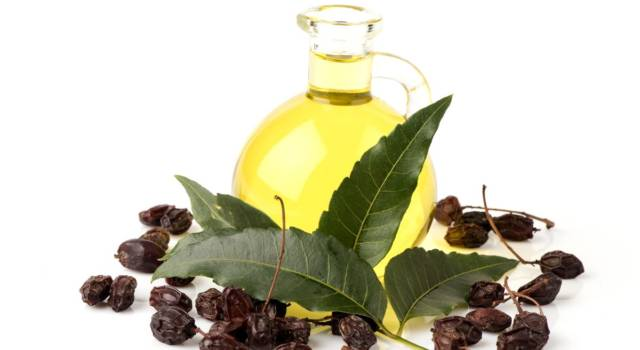 Neem oil, a natural remedy for infections and parasites