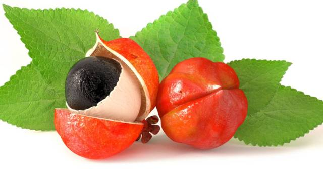 All there is to know about Guarana, the South American elixir of long life