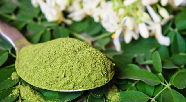 Moringa oleifera: the superfood with miraculous properties