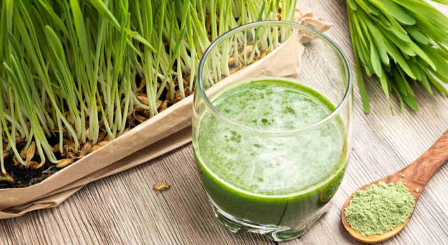 Barley grass: the superfood that makes you lose weight