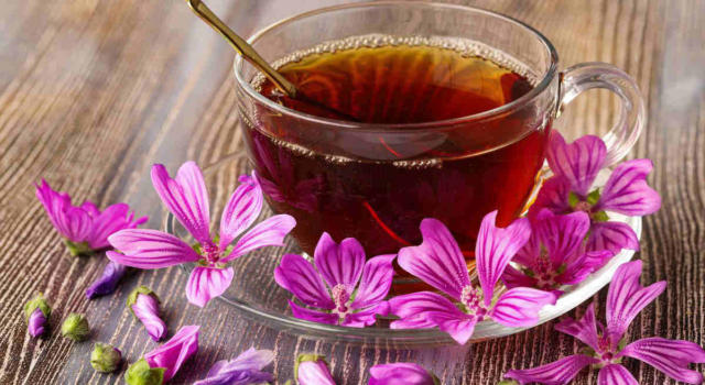 Mallow herbal tea: what is it for and what are its properties