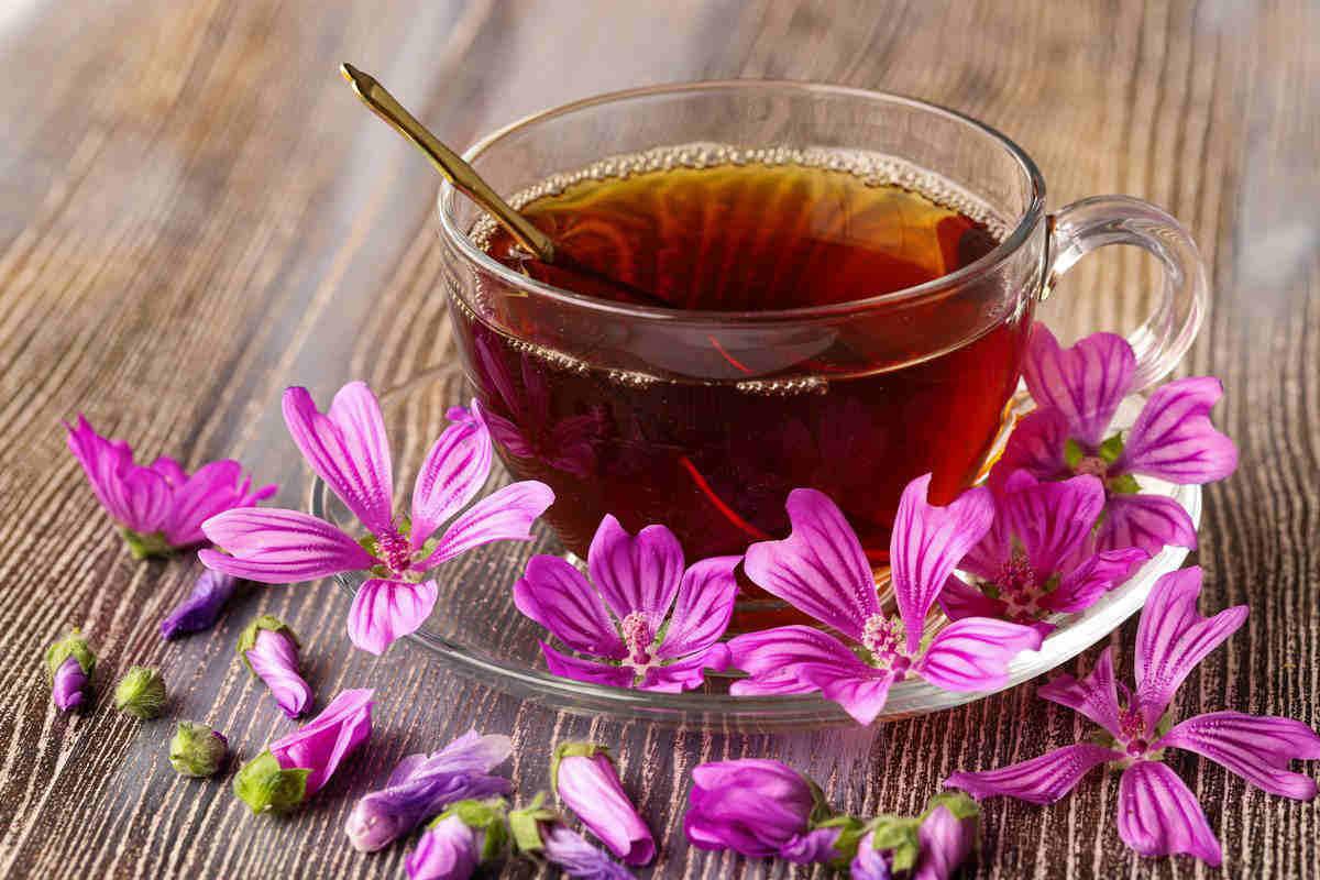 mallow herbal tea