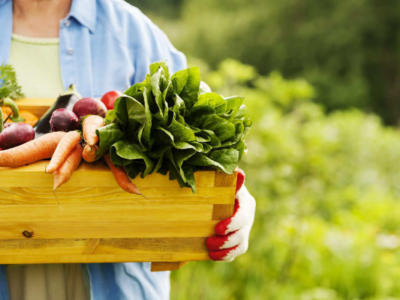 Seasonal vegetables in April: find out which ones are for eating more naturally