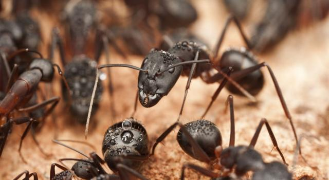 Home remedies for ants: here's how to get rid of them